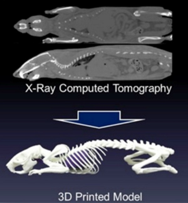 XRayCT and 3d Printed Image